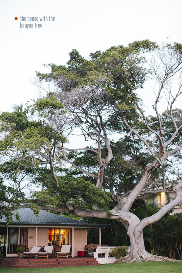 The amazing Banyan Tree in front of our house  in Oahu, Hawaii // WeAreAdventure.us