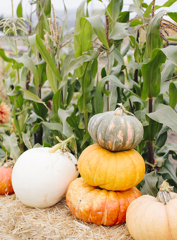 Fall Pumpkins, as part of a Local's City Guide to Half Moon Bay // WeAreAdventure.us