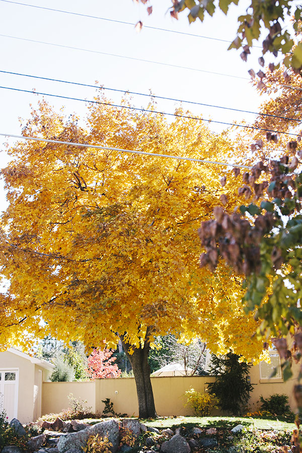 Beautiful Fall Leaves in Boulder, Colorado // WeAreAdventure.us