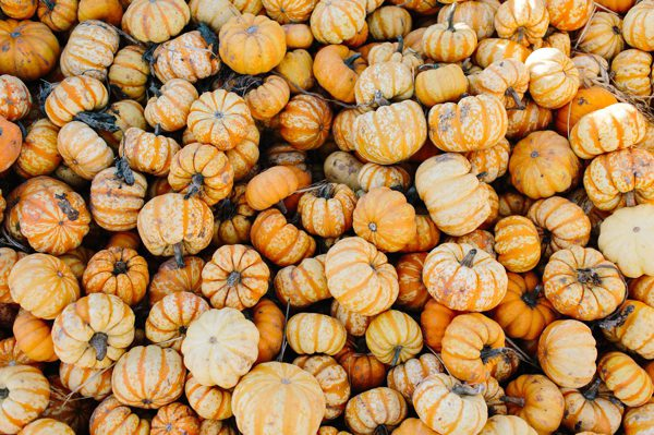 Pumpkin Patching in Santa Cruz before Halloween - Pick your pumpkin on the coast! // WeAreAdventure.us